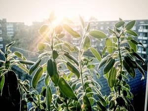 pflanze-auf-fensterbank
